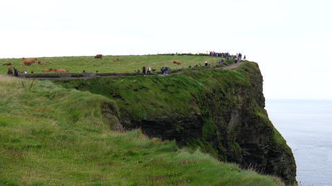 Animals and visitors tourists people at Cliffs of Moher Live Action