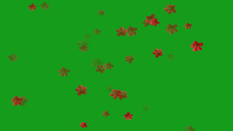Falling red flowers motion graphics with green screen background Animation