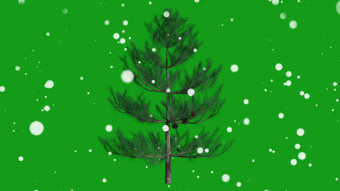 Christmas celebrations motion graphics with green screen background Animation