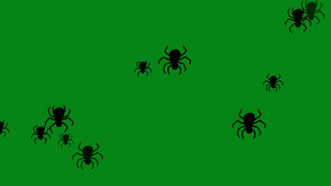 Scary spiders motion graphics with green screen background Animation