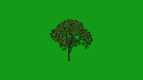 Moving tree motion graphics with green screen background Animation