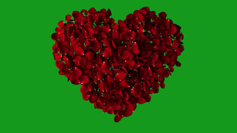 Rose petals in the shape of heart with green screen background Animation