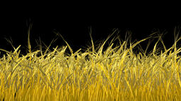 Growing wheat, Alpha included Animation