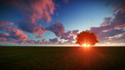 Isolated tree on green meadow, timelapse sunrise Animation