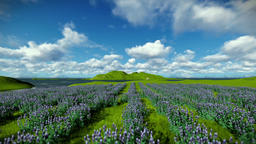 Lavender field against beautiful timelapse clouds Animation