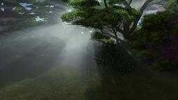 Magic forest, sun shinning through trees, pan and tilt Animation