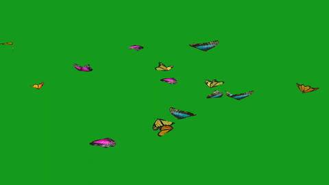 Flying butterflies motion graphics with green screen background Animation