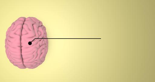 Abstract brain anatomy hemisphere anatomy cerebral anatomy brain human hemisphere human cerebral Videos animados