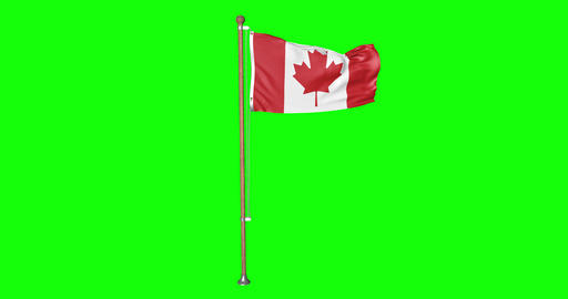 flag canadian pole canadian Canada canadian flag waving pole waving Canada waving flag green screen Animation