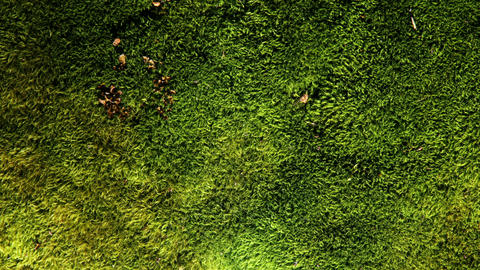 Green Moss Background Animation