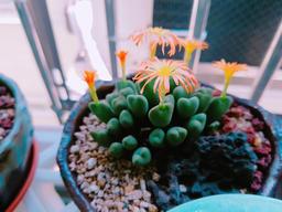 Tiny succulents in concrete pot Fotografía