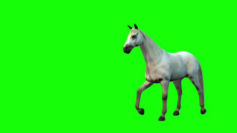 826 4K ANIMALS 3d computer generated white hourse idle move and run Two view camera Animation