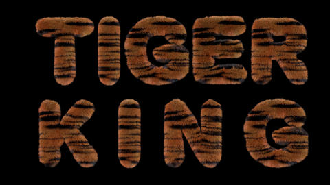 3d animated text spelling Tiger king, made of fury Tiger striped letters CG動画