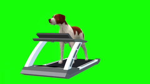 830 4K ANIMALS HEALTH 3D computer generated DOG walking and running on treadmill Animation