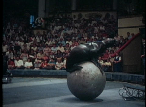 A trained seal juggles a ball in this series of circus shots Stock Video Footage