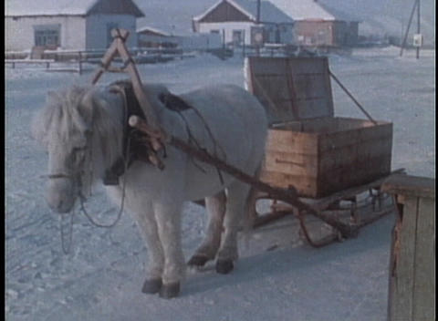 A man removes firewood from a horsedrawn carriage Stock Video Footage