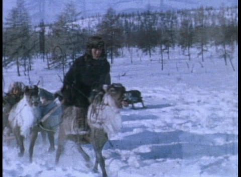 An Eskimo rides on a reindeer sled Stock Video Footage