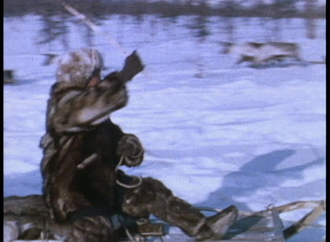 An Eskimo rides on a reindeer sled Footage