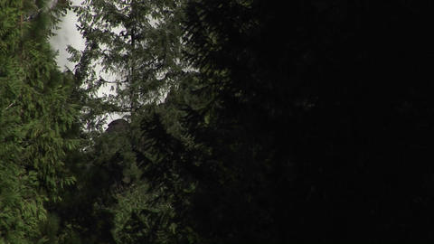 The camera pans up through thick vegetation to the top of... Stock Video Footage