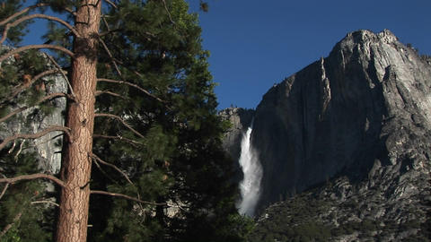 A spectacular view of a mountain waterfall in the distance and a pine tree in the foreground Footage