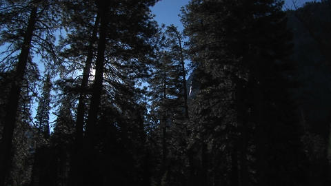 The camera pans left through a forest past rugged... Stock Video Footage