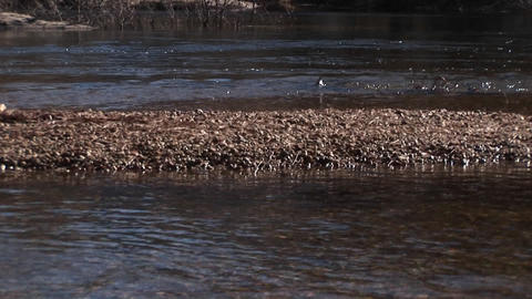 A look from the rocky stream-bed up through bare trees to... Stock Video Footage