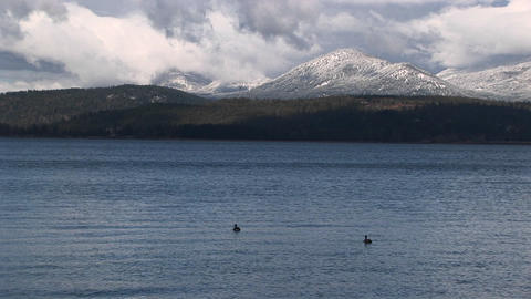 ducks float on a quiet mountain lake Footage