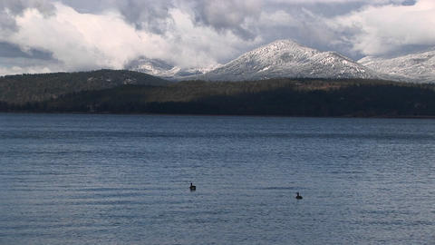 ducks float on a quiet mountain lake Stock Video Footage