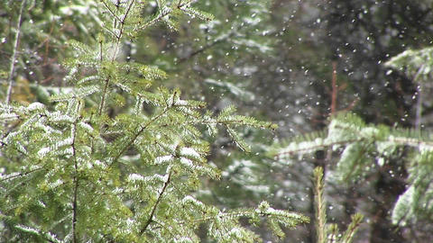 A close-up look at still green foliage in a heavy snow Stock Video Footage