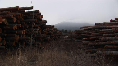 Long rows of neatly stacked lumber leads the eye to a mist-covered mountain in the distance Footage