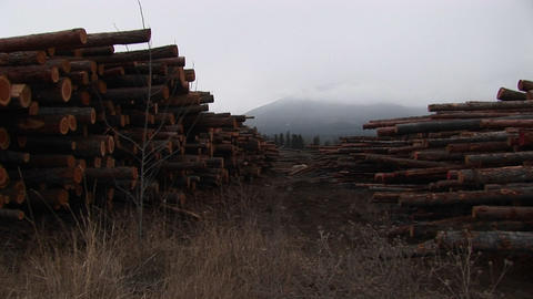 Long rows of neatly stacked lumber leads the eye to a... Stock Video Footage