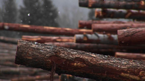 Light snow falls on a stack of cut logs Stock Video Footage