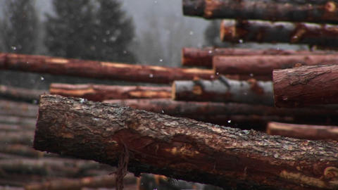 Light snow falls on a stack of cut logs Footage