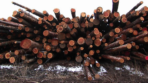 A close-up montage of newly cut lumber with interesting mix of shapes, hues and colors Footage