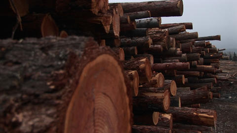 The camera pans down for extreme close-up of one log in a... Stock Video Footage