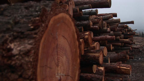 The camera pans down for extreme close-up of one log in a stack of newly cut timber Footage