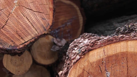 An extreme close-up of a cut log showing cracks, rings,... Stock Video Footage