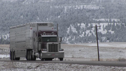 Trucks carrying livestock roll down a road in rural America Stock Video Footage