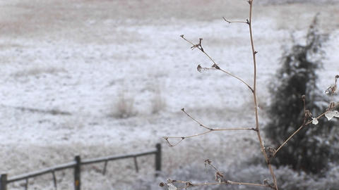 A few leaves cling to the dried branches of a small tree after a brief snowfall on the prairie Footage