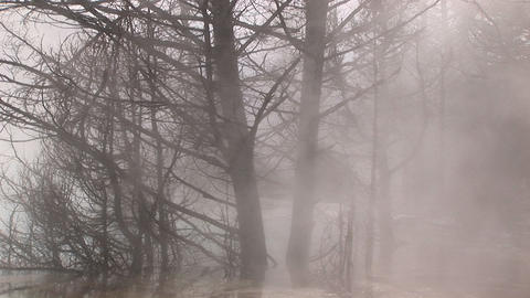 Heavy steam from a nearby hot springs envelopes winter's bare trees Footage