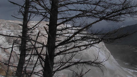 Long-shot through trees towards a steppe geyser in a... Stock Video Footage