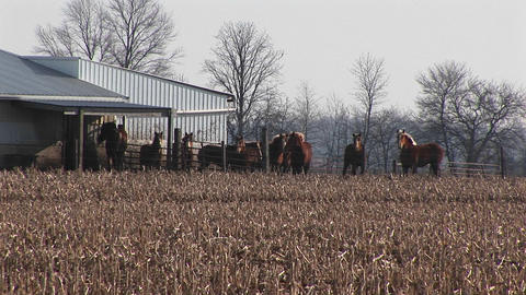 Horses are corralled together outside near a barn Stock Video Footage