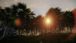 Oil Palm Tree Plantation against beautiful sunrise Animation