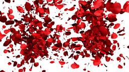 Rose Petals forming a Heart, Alpha Animation