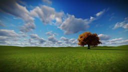 Solitary tree on green meadow, timelapse clouds Animation