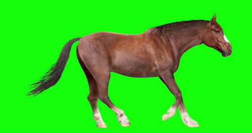 Brown Horse Looping Gaits Animation