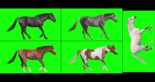 Five Horses, Looping Gaits Animation