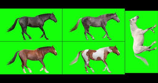 Five Horses, Looping Gaits Videos animados