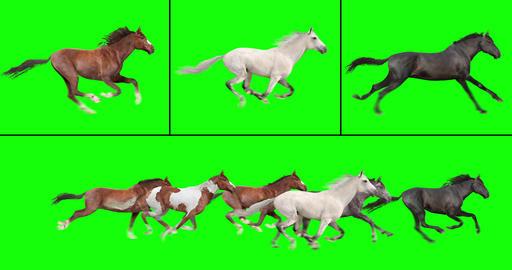 Herd of Horses Running Videos animados