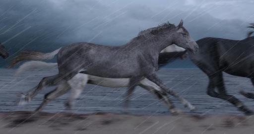 Horses Running on Beach Animation